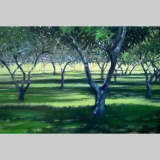 Orchard_shadows_20x30_OOL