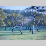 early_morning_light_quail_hill_12x16_OOL